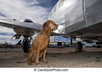 dog sitting beside an airplane