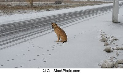 Dog sitting by the side of the road in the snow