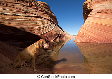 dog sitting by the water in the wave coyote butte