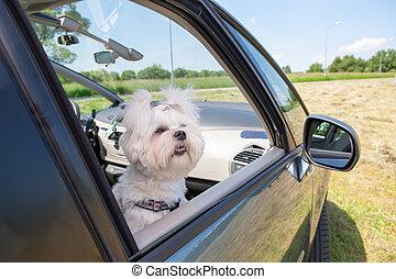 Dog sitting in a car