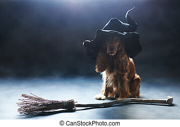dog sitting in a witches hat - red dog sitting in a witches...