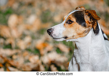 Dog sitting in autumn leave