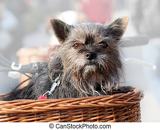 Dog Sitting in Basket