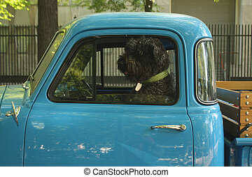 Dog sitting in car window.