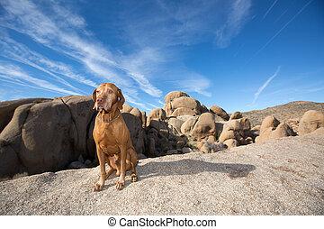 dog sitting in desert