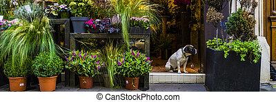 Dog sitting in doorway of Paris flower shop