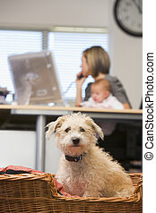 Dog sitting in home office with woman holding baby in...