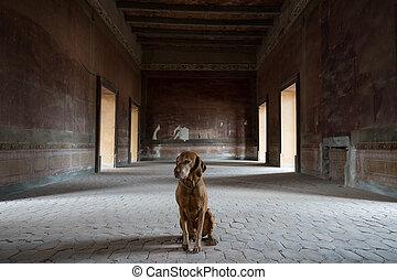 dog sitting in medieval abandoned room