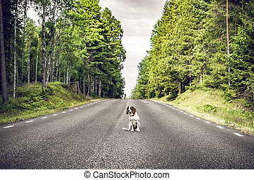 Dog sitting in the middle of the road