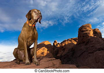 dog sitting in the valley of fire nevada