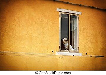 Dog sitting in the window