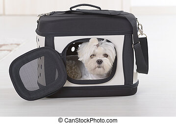 Dog sitting in transporter - Small dog maltese sitting in ...