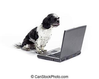 dog sitting looking at laptop