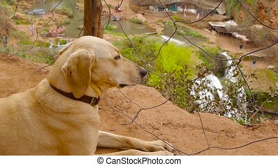 dog sitting near fencing steel mesh, waterfall in background