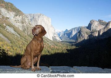 dog sitting obediently in Yosemite