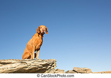dog sitting on a cliff edge