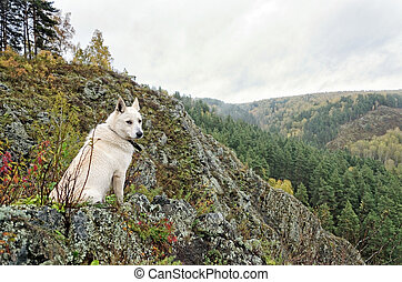 Dog sitting on a cliff