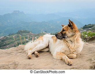 Dog sitting on a mountain top
