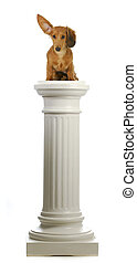 dog sitting on a pedestal