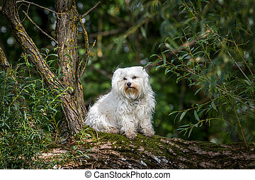 Dog sitting on a tree