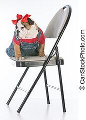 dog sitting on chair