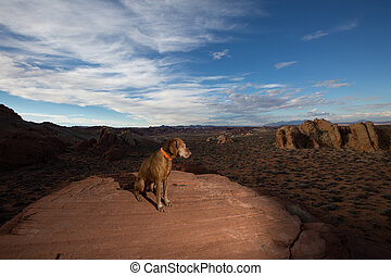 dog sitting on ciff in the valley of fire nevada