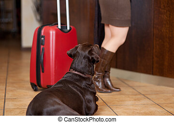 Dog Sitting On Floor While Low Section Woman At Reception -...