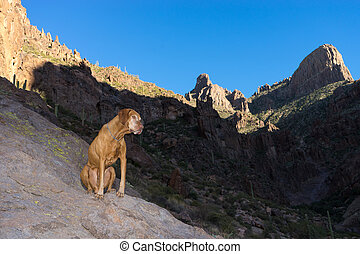 dog sitting on hike in the superstition mountains arizona