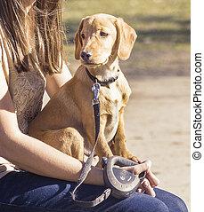 dog sitting on lap