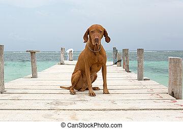 dog sitting on pier in Mayan Riviera, Yucatan, Mexico