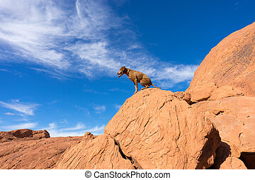 dog sitting on red rock cliff in nevada