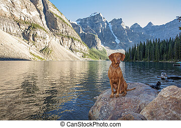 dog sitting on rock by glacier lake