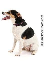Dog Sitting Profile