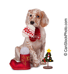dog sitting with christmas baubles, isolated white background
