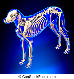 Dog Skeleton - Canis Lupus Familiaris Anatomy - perspective...