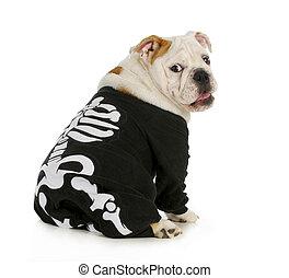 dog skeleton - english bulldog wearing skeleton costume with...