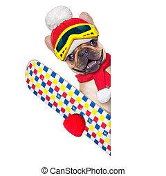dog ski winter - fawn french bulldog dog with ski equipment...