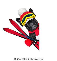 dog ski winter