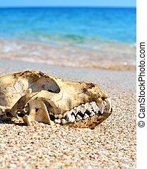 Dog skull on the beach against blue sky