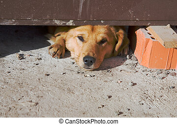 dog, slapende, op, bouwsector, gebied