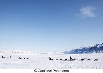Dog Sled - A number of dogsleds on a barren winter landscape