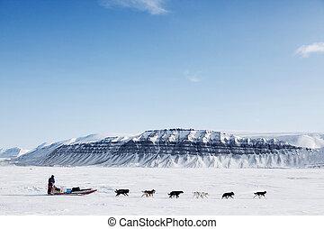 A dog sled running on a barren winter landscape