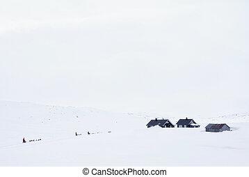 Dog sled on the Hardangervidda