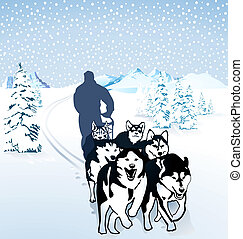 Dog sledding in the snow