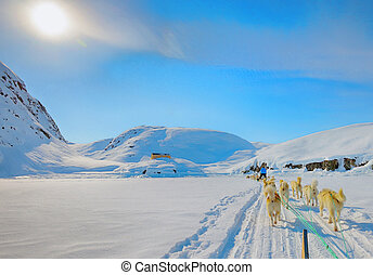 dog sledging in spring time in greenland - Dog sledding on a...