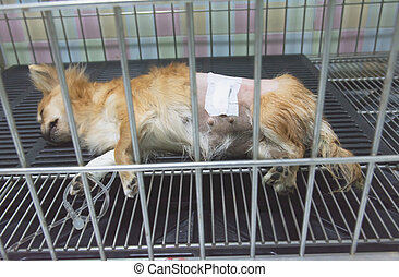 Dog sleeping for recovery in the cage after the surgery.