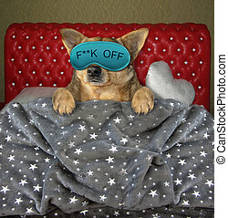 Dog sleeping in mask