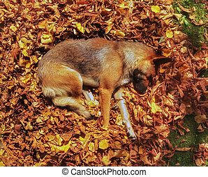 Dog sleeping in the autumn leaves