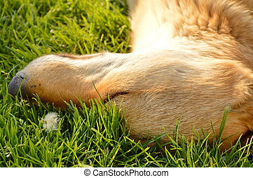 Dog sleeping in the grass