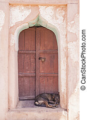 Dog sleeping on a door step